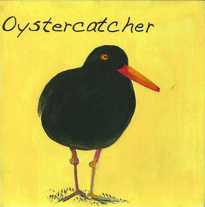 Oystercatcher-700