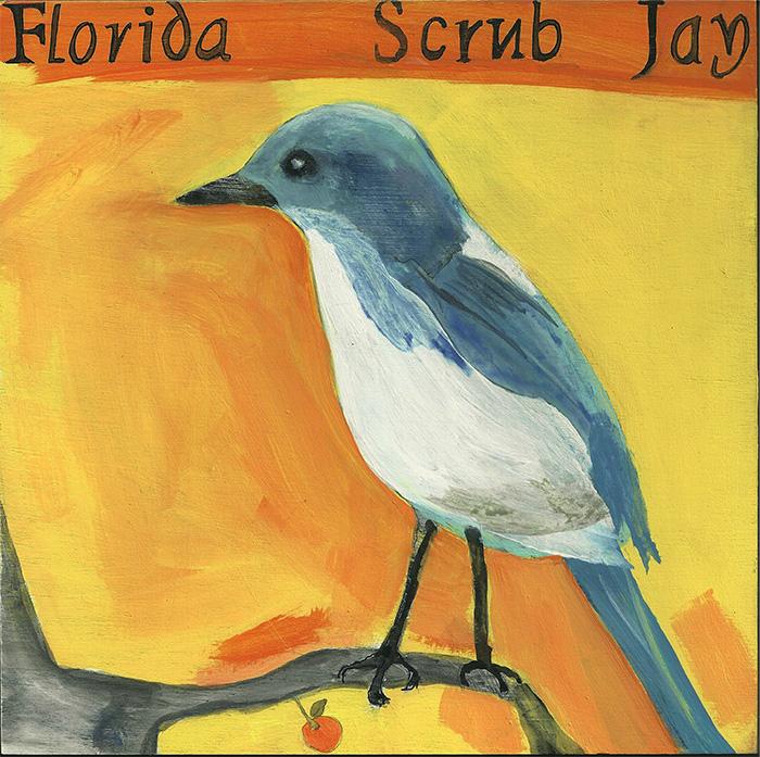 FloridaScrubJay2-700