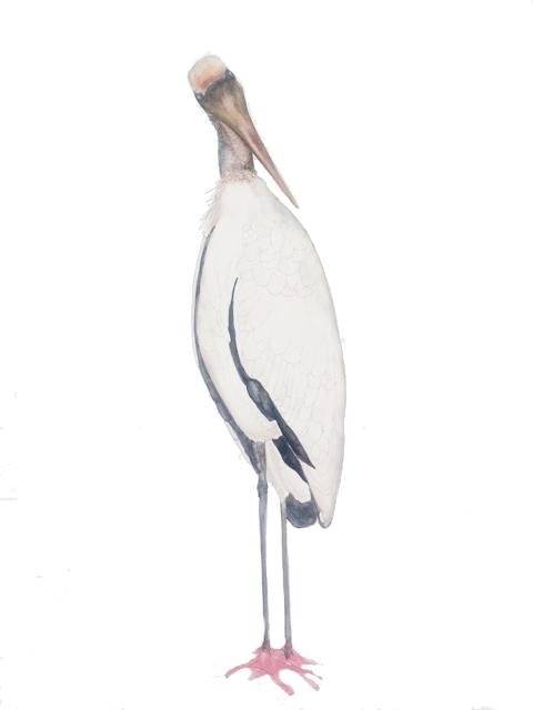 Pensive wood stork