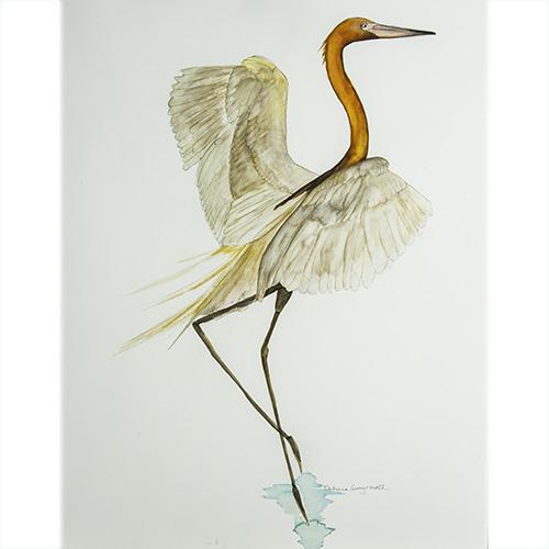 Bird349-500x500