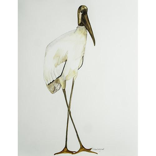 Bird351-500x500