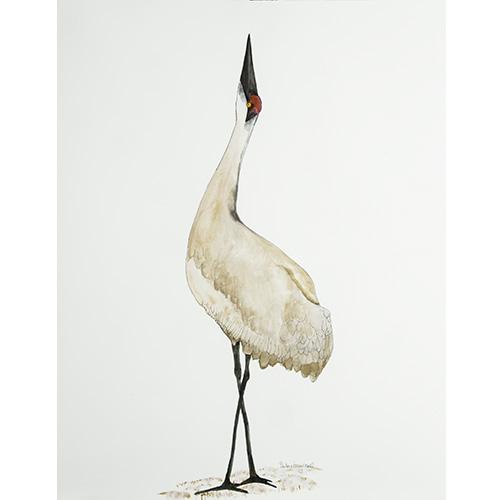Bird357-500x500