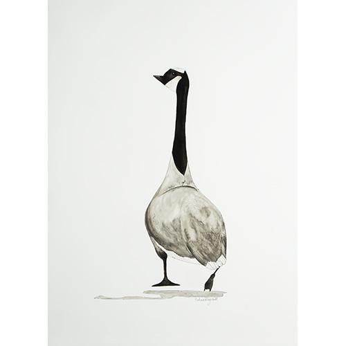 Bird3591