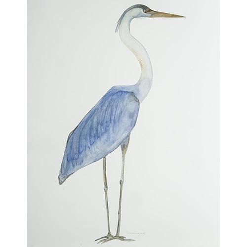 Bird366