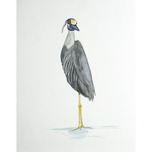Bird3671