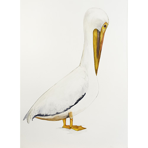 Bird-Apr15-12-500x5001